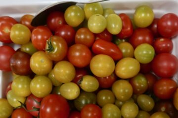 tomater Sånnagården
