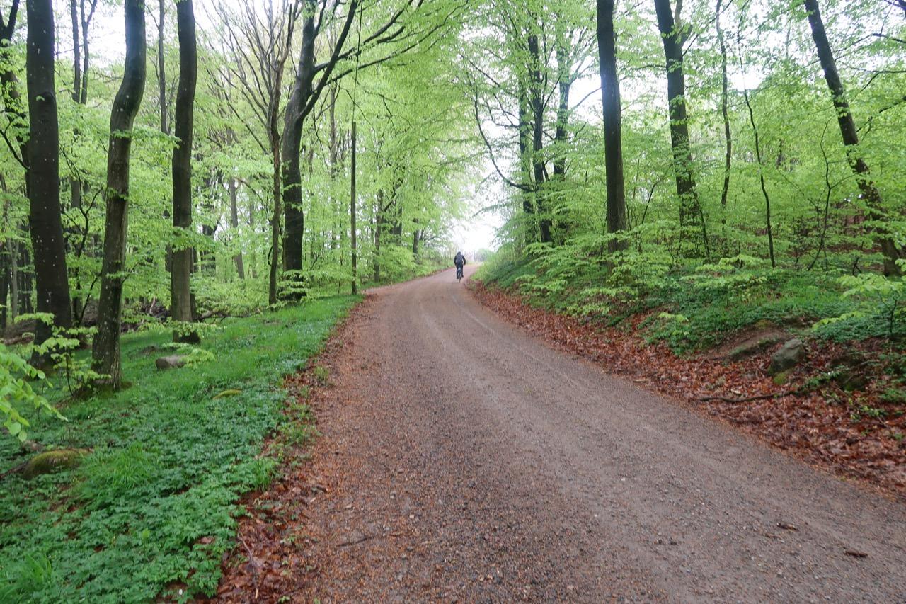 Stenestads park Söderåsen
